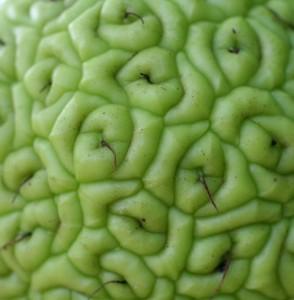 адамово яблоко лечение
